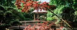 Japanese Garden in Cornwall