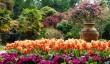 abbotsbury-gardens.jpg
