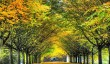 anglesey-abbey-autumn.jpg