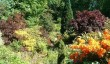 ascog-fernery-garden.jpg
