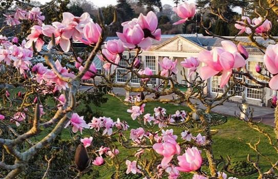 Beautiful garden in Devon Bicton Park