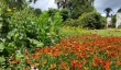 beautiful-gardens.jpg