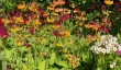 branklyn-garden.jpg