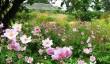 cambo-gardens.jpg