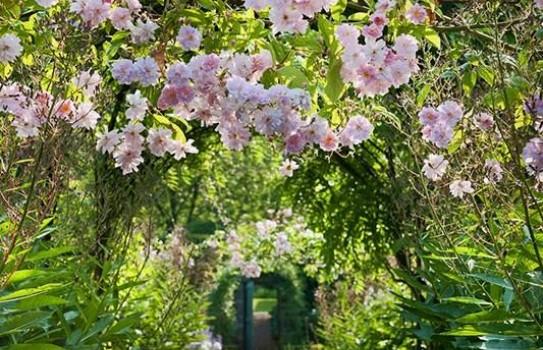 Carolside Garden