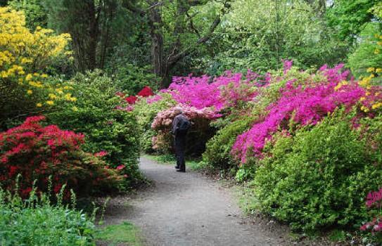 Clyne Gardens