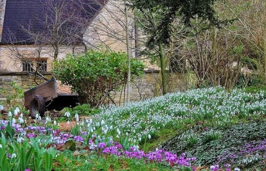 Colesbourne Park Snowdrops