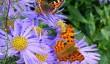cornwall-wildlife-garden.jpg