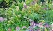 courts-garden-in-wiltshire.jpg