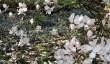 emmetts-magnolia.jpg