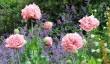 englefield_house_poppies.jpg