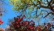 exbury-gardens-spring.jpg