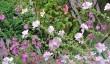 garden-in-wiltshire.jpg