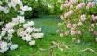 gardens-close-dartmouth.jpg