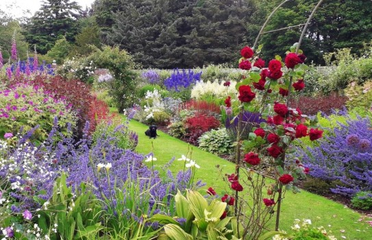 Gardens in Angus