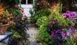 gardens-in-pembrokeshire.jpg