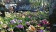 gardens-in-wiltshire.jpg