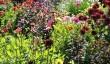 gardens-to-visit-cornwall.jpg