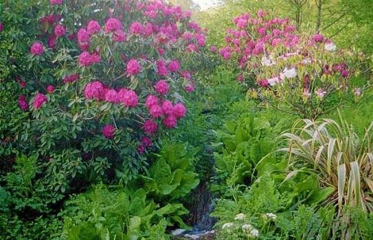 Gardens to visit Dartmouth