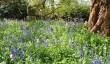 gardens-visit-in-shropshire.jpg
