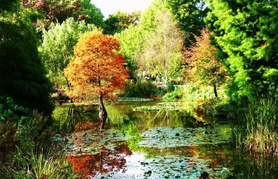 Hillier Garden