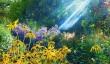hillier_gardens.jpg
