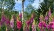 hyde-hall-garden.jpg