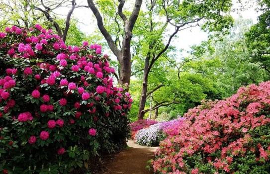 The Isabella Plantation in Richmond Park
