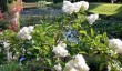 kentwell-gardens.jpg