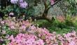 lanhydrock-gardens.jpg