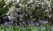 leonardslee-garden-rhododendron.jpg