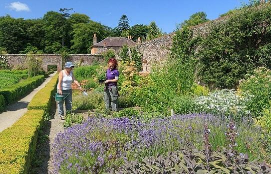Llanerchaeron Garden