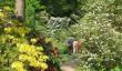 minterne-garden-dorset.jpg
