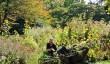 oxford-botanic-gardens.jpg