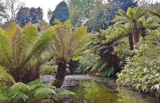 Penjerrick Gardens
