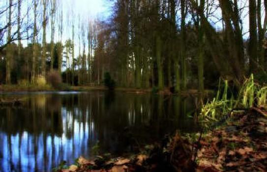 The Quinta Arboretum