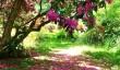 ramster_garden.jpg