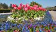 rhs-garden-in-rosemoor.png
