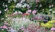 rosemoor-garden-devon.jpg