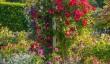 rosemoor-rhs-garden.jpg