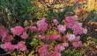 st-andrews-botanic-gardens-scotland.jpg