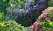 traquair-garden.jpg