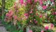 whalton-manor-roses.jpg