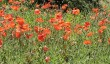 wightwick-manor-garden.jpg