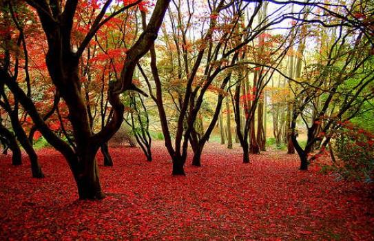Winkworth Arboretum a National Trust Garden in Surrey