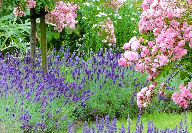Cottage Garden Worcestershire