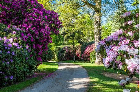 Bowood Rhododendron Gardens Near Chippenham Great
