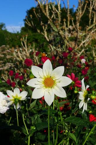 Goodnestone Park Gardens Near Canterbury Amp Hotels