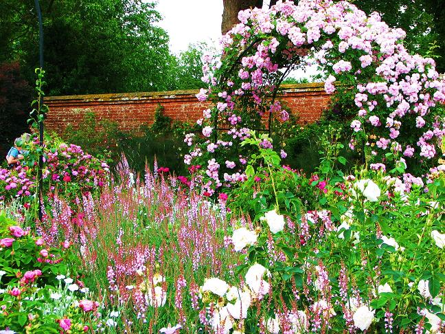 25 Gorgeous Shade-Tolerant Plants That Will Bring Your Shaded ...