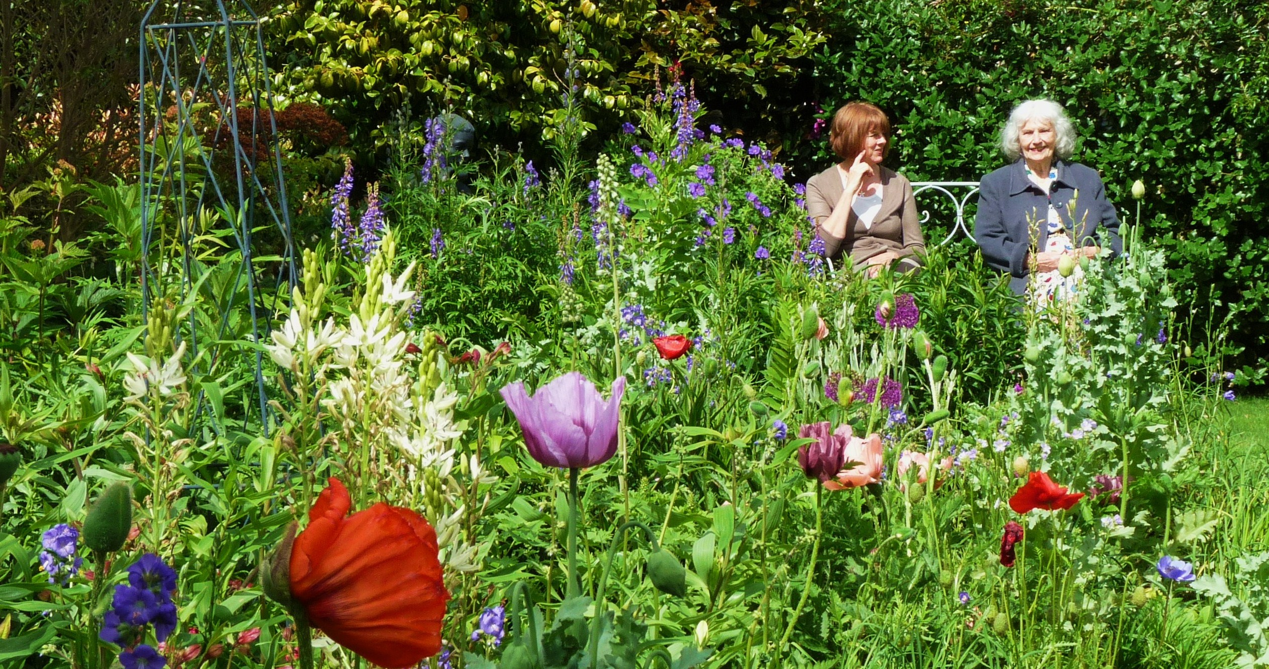 Cottage Gardens: Poppy Cottage Garden Near St Mawes And Places To Stay